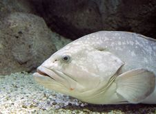 Free Big Fish In Aquarium Stock Photos - 3589383