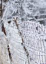 Free Icy Dilapidated Fence Royalty Free Stock Images - 35801919
