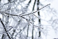 Free Frozen Branch Stock Photo - 35801920