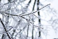 Free Frozen Branch Stock Photo - 35801920
