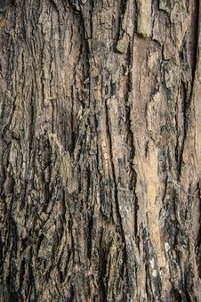 Free Brown Rough Bark Royalty Free Stock Photography - 35802297