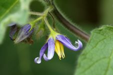Free Pruple Flowers Stock Photos - 35816263