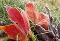 Free Fall Leaf Stock Photo - 35823710