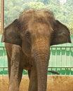 Free Elephant Stock Images - 35829634