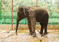 Free Elephant Royalty Free Stock Photos - 35829638