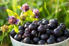 Free Blackcurrant In A Cup Stock Images - 35823754