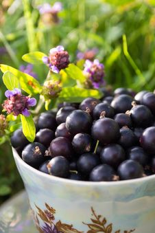 Free Blackcurrant In A Cup Stock Photography - 35823992