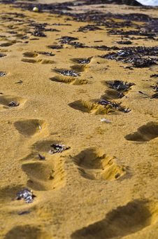 Free Footsteps In The Sand Stock Images - 35825884