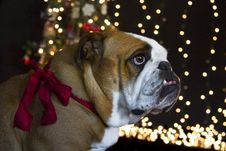 Free Im Waiting For Santa Clause Royalty Free Stock Photos - 35827158
