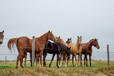 Free Group Of Horses Royalty Free Stock Images - 35827729