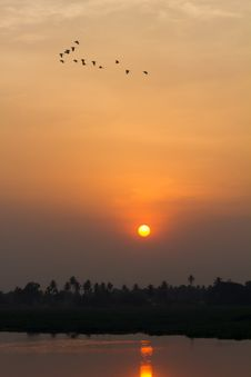 Flock Of Birds During Sunset Royalty Free Stock Images