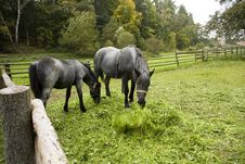 Free Two Horses Stock Images - 35840324