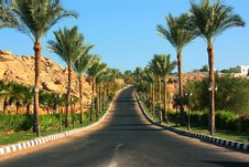 Free Road Among Palms Egypt Royalty Free Stock Photography - 35843217