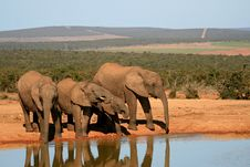 Free Elephants Drinking Stock Photos - 35846823