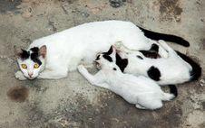 Free Street Cat Royalty Free Stock Image - 35850116
