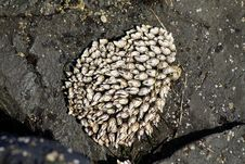 Free Barnacles On The Beach Stock Image - 35851571
