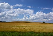 Free Wheat Field Royalty Free Stock Photos - 35859808