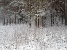Free Winter Snowy Forest Stock Photos - 35861883