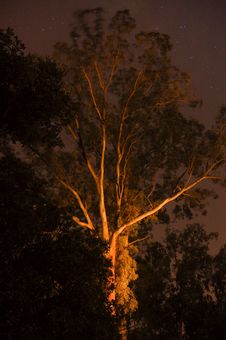 Free Ghostly Gum Tree At Night Stock Photos - 35862703