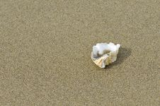 Free Sea Shell On The Beach. Royalty Free Stock Photography - 35863527