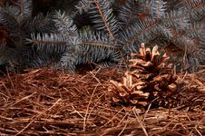 New Year`s Composition Of A Pine Cones Stock Images
