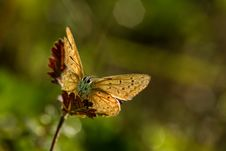 Free Butterfly Stock Image - 35864841