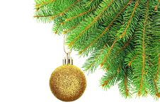Free Branches Of Christmas Spruce On A  White Background. Stock Photo - 35871270