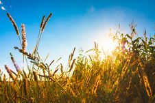 Free Dry Grass Field Scene Stock Photos - 35873393