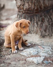 Free Puppy Stock Images - 35875814