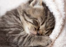 Free 3 Weeks Sleeping Baby Kitten Stock Photos - 35884213