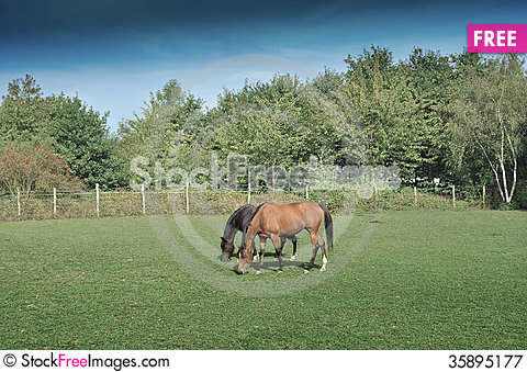 Free Horse Royalty Free Stock Photography - 35895177