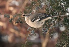Free Bird Birds Royalty Free Stock Images - 35894479