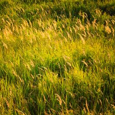 Free Green Grass Stock Photography - 35896842
