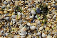 Free Shells Stock Photos - 35898603