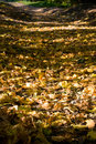 Free Fallen Leaves Royalty Free Stock Photography - 3599317