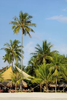 Free Sand Beach In Tropics Stock Photography - 3590232