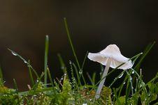 Free Translucent   Mushroom Stock Image - 3590551