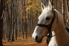 Free Horse Royalty Free Stock Photography - 3590897