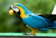 Free Parrot With Ball Royalty Free Stock Image - 3591796
