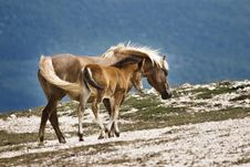 Free Two Horses Stock Photo - 3592080
