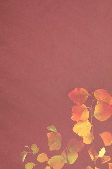 Free Autumn Frame Stock Photos - 3595353