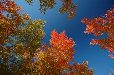 Free Late Autumn Stock Images - 3595374