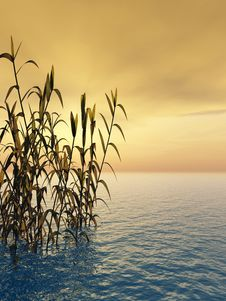 Free Water Grass Royalty Free Stock Photos - 3595588