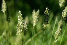 Free Grass 2 Royalty Free Stock Photos - 3596878