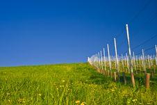 Free Vineyard Royalty Free Stock Photos - 3597828
