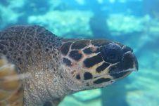 Free Sea Turtle Stock Photo - 3597940