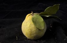 Free Quince Stock Photography - 3598562
