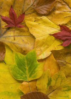 Free Colourful Autumn Leaves Royalty Free Stock Photography - 3598957