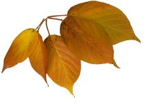 Free Five Autumn Leaves Stock Image - 3598971