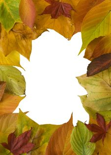 Colourful Autumn Leaf Frame Stock Photography